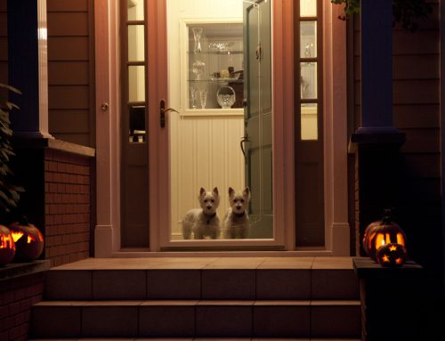 4 Top Tricks for Keeping Pets Safe this Halloween
