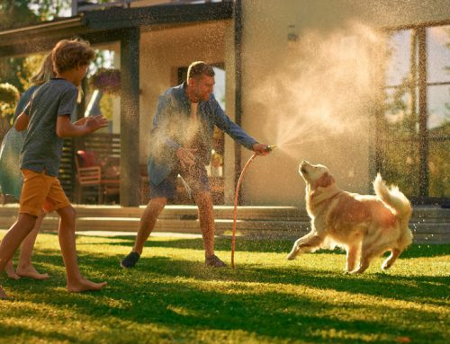 Heatstroke in Pets: What You Need to Know